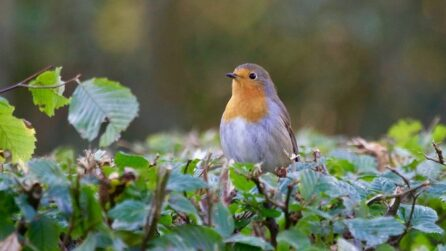 flora en fauna aamw vw blog wet na
